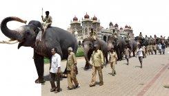 An elephantine pageantry