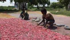 SC verdict on firecrackers: Sivakasi feels the heat